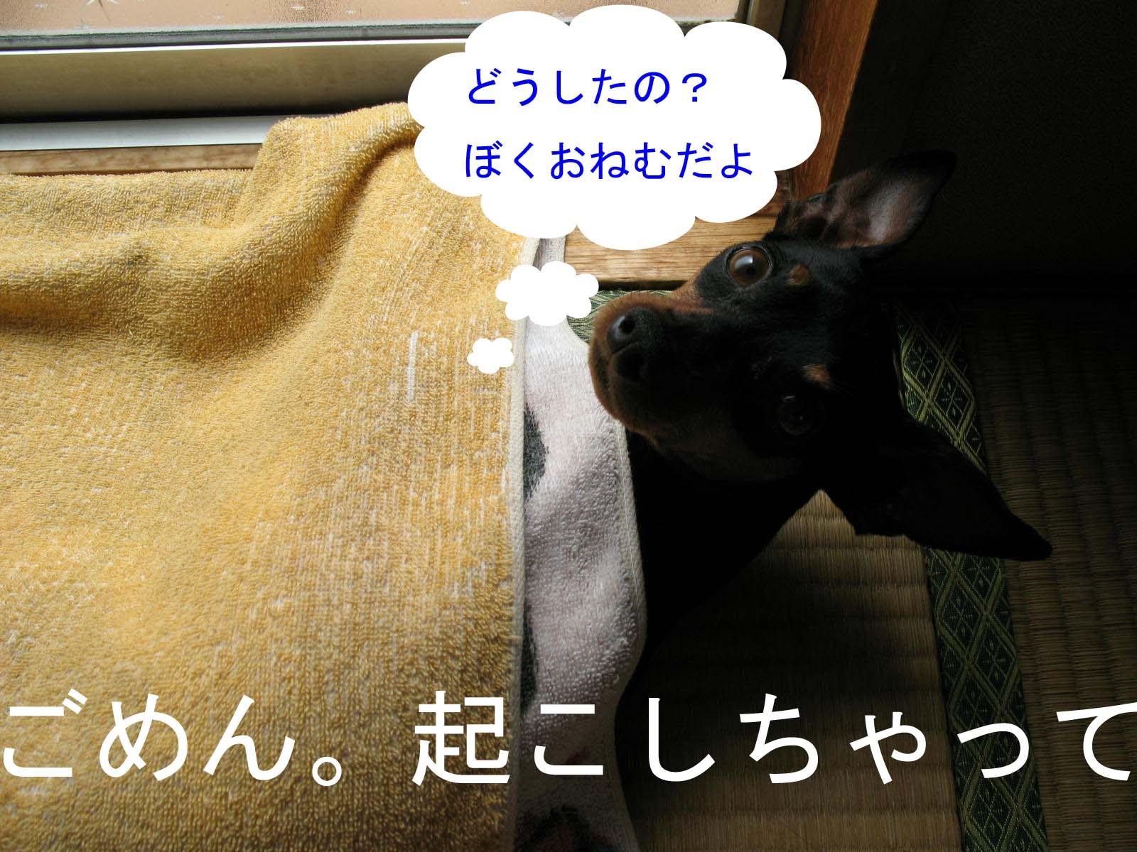 2008_08_24_001_edited1_2
