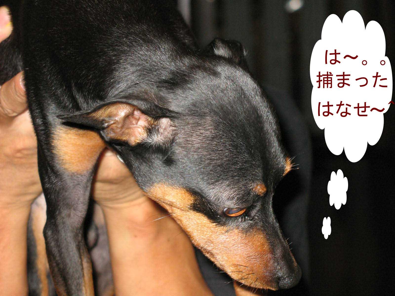 2008_09_11_009_edited1