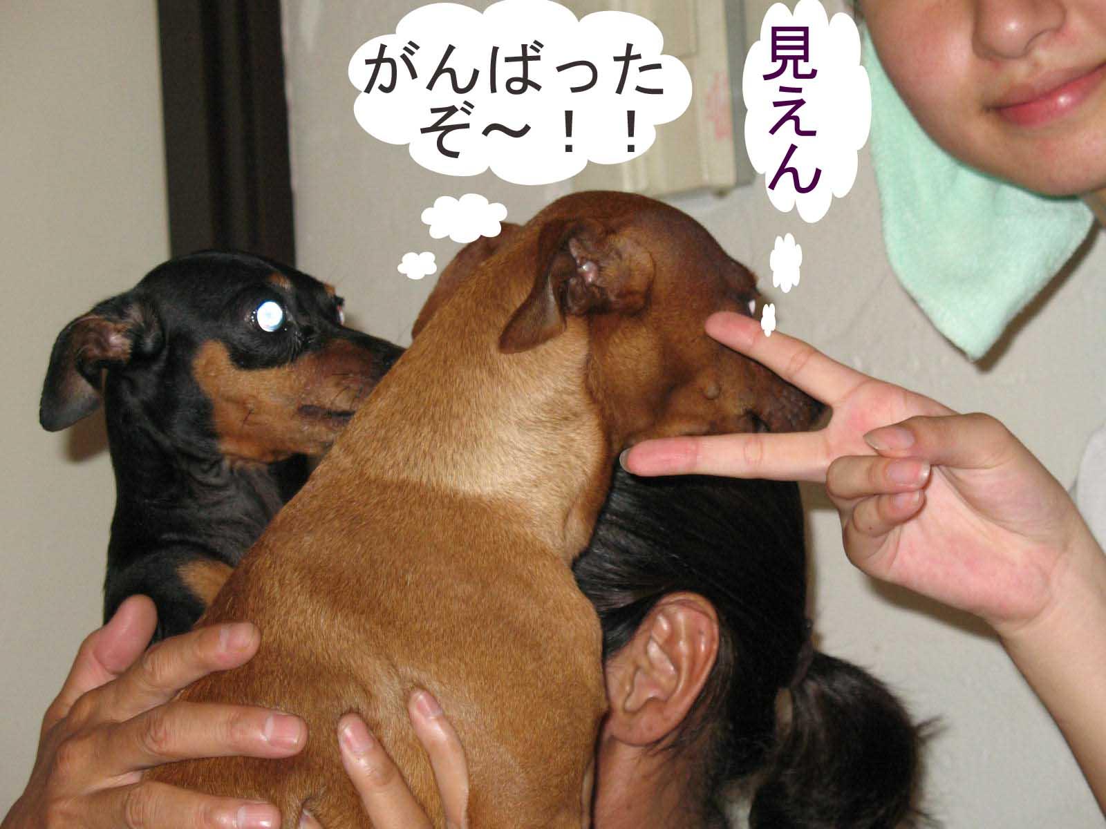2008_09_13_004_edited1