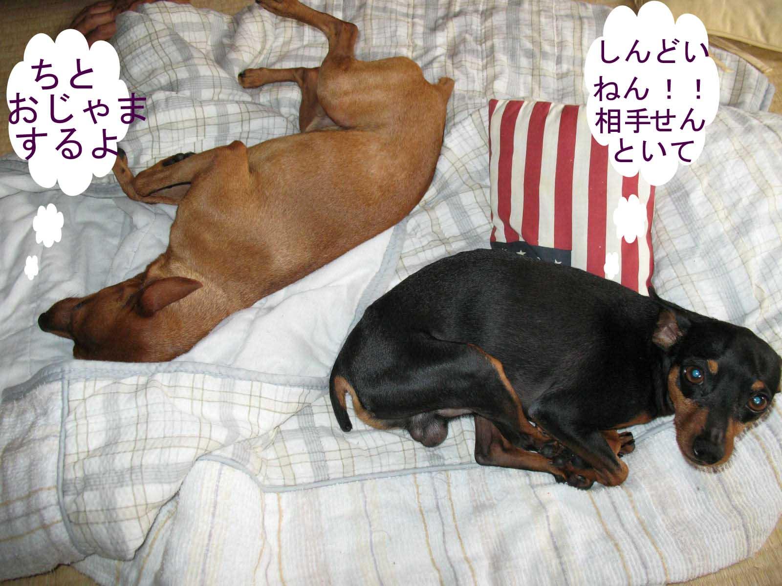 2008_09_15_005_edited1