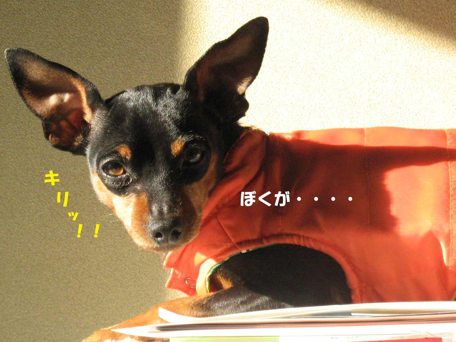 2008_11_13_023_edited1