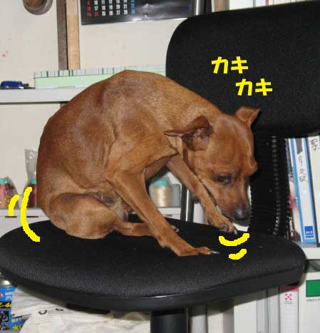 2008_11_25_020_edited1