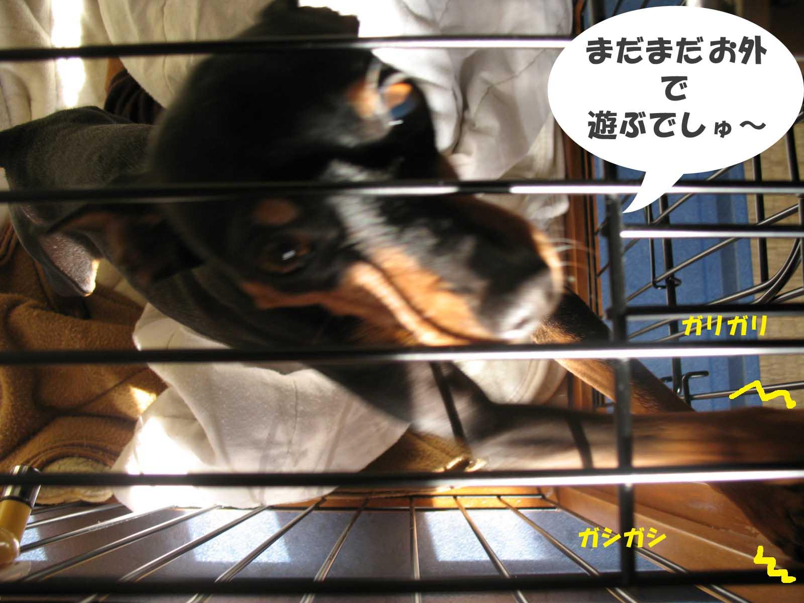 2008_12_11_017_edited1