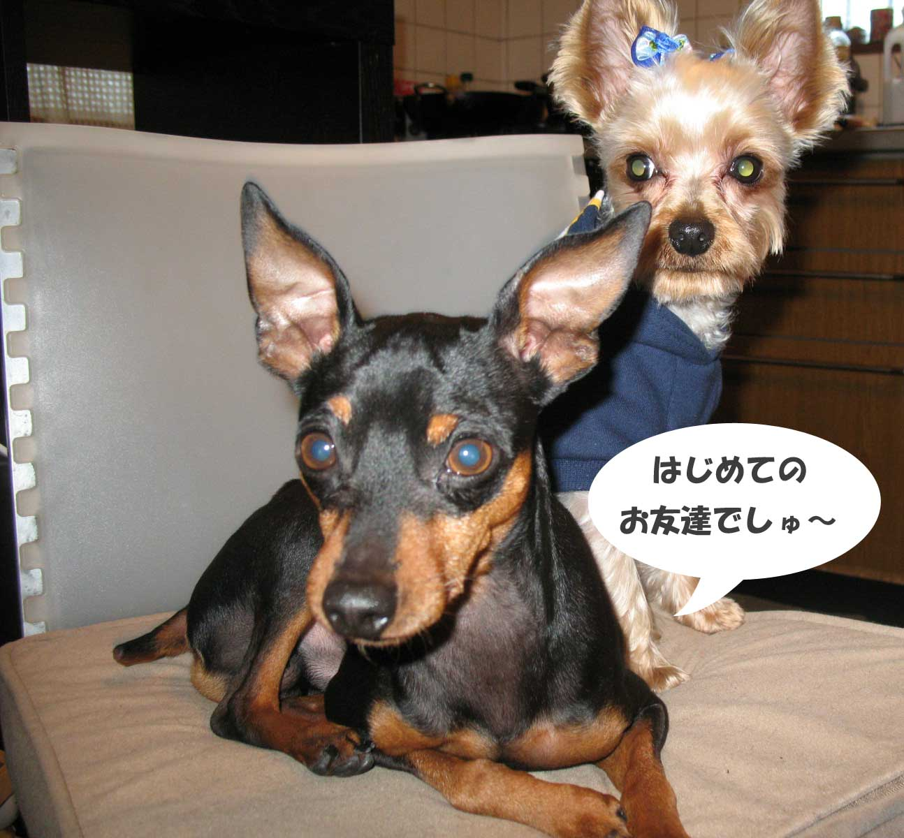 2008_12_15_041_edited1