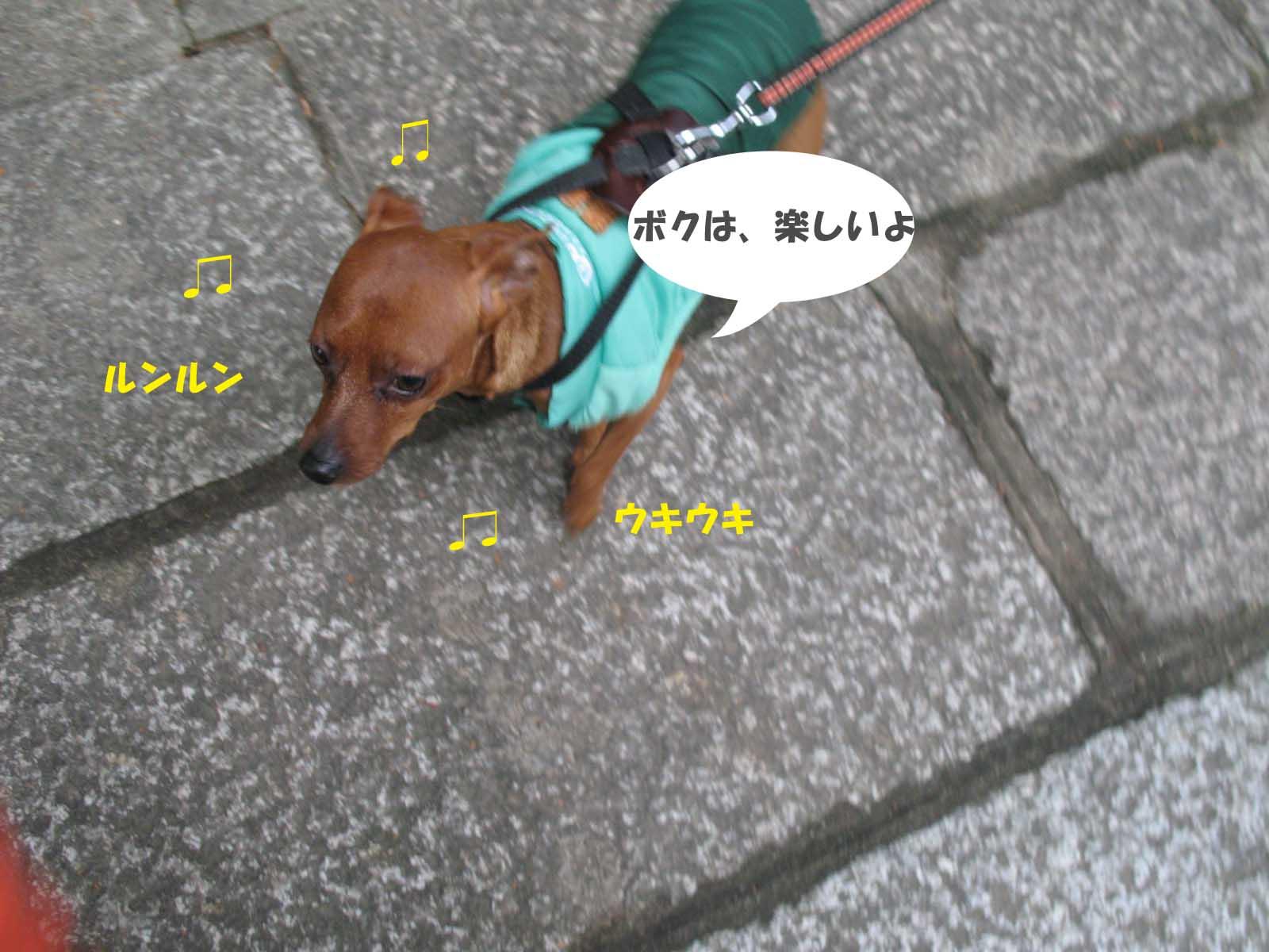 Hoku_2